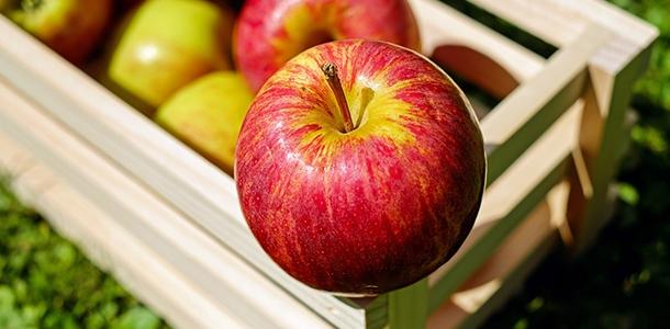 Nicht nur wir Menschen bieten Bakterien einen guten Nährboden. Wie eine Studie zeigt, sind sie z.B. auch in Äpfeln reichlich vorhanden.