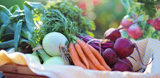 Ein hoher Verzehr von Bio-Lebensmitteln führte in einer großen französischen Bevölkerungsstudie zu einer deutlichen Senkung des Krebsrisikos