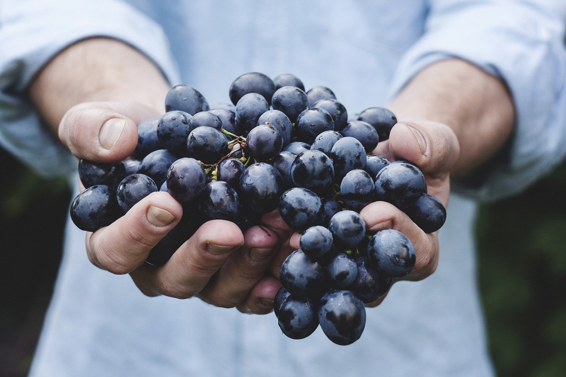 Anthocyane aus Beeren beim metabolischen Syndrom